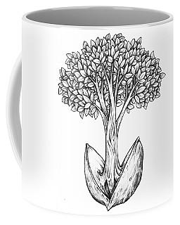 Tree From Seed Coffee Mug