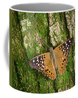 Coffee Mug featuring the photograph Tree Hugger by Bill Pevlor