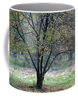 Tree In Forest With Autumn Colors Coffee Mug