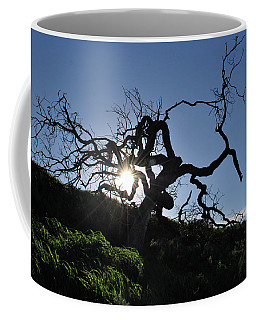 Coffee Mug featuring the photograph Tree Of Light - Sunshine Through Branches by Matt Harang
