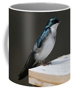 Tree Swallow Coffee Mug