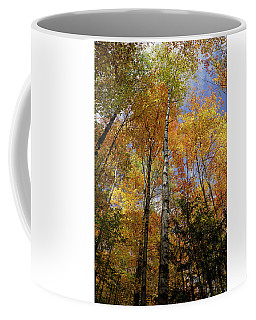 Coffee Mug featuring the photograph Trees On The Lincoln Woods Trail by Nancy De Flon