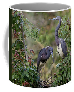 Tri-colored Herons On The Nest Coffee Mug