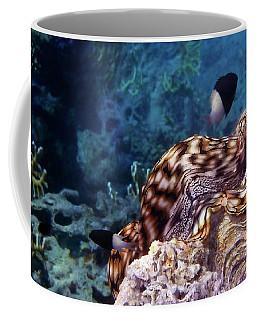 Tridacna Squamosa  Coffee Mug