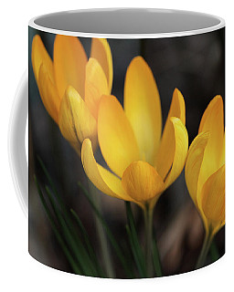 Coffee Mug featuring the photograph Triplets by Connie Handscomb