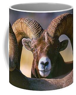 Trophy Bighorn Ram Coffee Mug