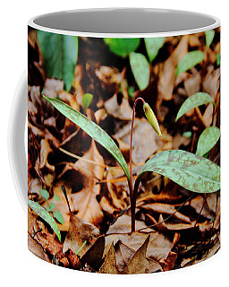 Trout Lily Coffee Mug