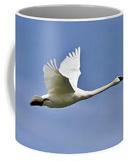 Trumpeter Swan In Flight Coffee Mug