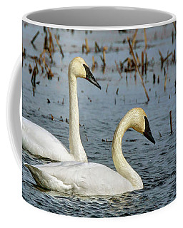 Coffee Mug featuring the photograph Trumpeter Swan - Pair by Nikolyn McDonald