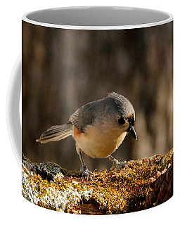 Tufted Titmouse In Fall Coffee Mug by Sheila Brown