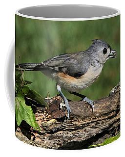 Tufted Titmouse On Tree Branch Coffee Mug