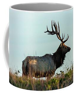 Coffee Mug featuring the photograph Tule Elk 3 by Jonathan Nguyen