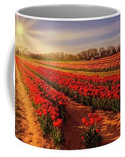 Coffee Mug featuring the photograph Tulip Farm Sunset by Susan Candelario