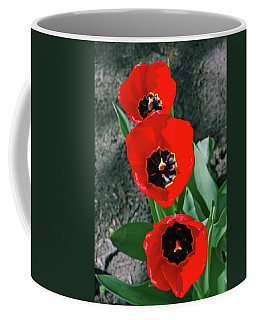 Coffee Mug featuring the photograph Tulip Trio by LeeAnn McLaneGoetz McLaneGoetzStudioLLCcom