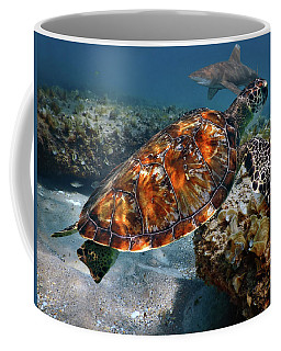 Turtle And Shark Swimming At Ocean Reef Park On Singer Island Florida Coffee Mug by Justin Kelefas