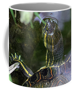 Coffee Mug featuring the photograph Turtle Getting Some Air by Raphael Lopez