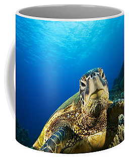 Turtle Stare Coffee Mug