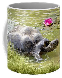 Turtle Takes A Swim Coffee Mug by Ricky Dean
