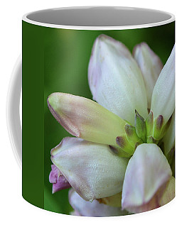 Turtlehead Closeup Coffee Mug