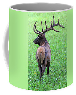 Twelve Point Stud Coffee Mug