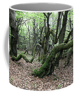 Coffee Mug featuring the photograph Twisted Trunks Of Beech Trees - Old Beech Forest by Michal Boubin