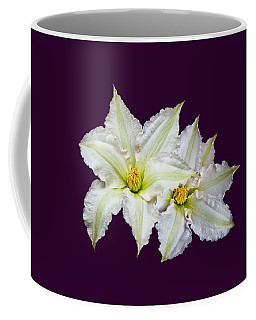 Two Clematis Flowers On Purple Coffee Mug
