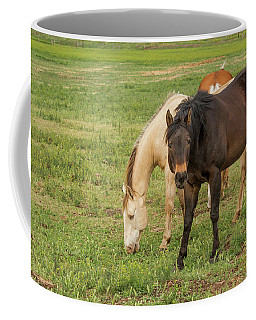 Two Grazing Horses Coffee Mug