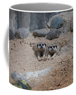 Coffee Mug featuring the photograph Two Meerkat Looking Directly To The Camera by PorqueNo Studios