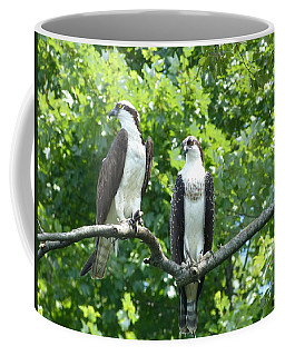 Coffee Mug featuring the photograph Two On A Limb - Osprey by Donald C Morgan