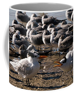 Two Royal Terns Arguing At The Beach Coffee Mug