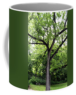 Coffee Mug featuring the photograph Two Tone Tree by W And F Kreations