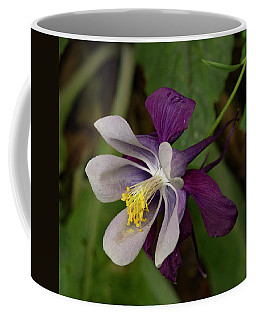 Coffee Mug featuring the photograph Two Toned Columbine by Jean Noren