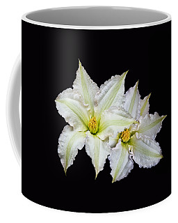 Two White Clematis Flowers On Black Coffee Mug