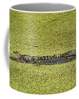 Coffee Mug featuring the photograph Two Young Gators by Steven Sparks