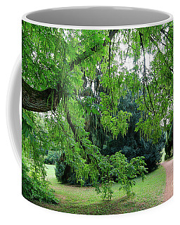 Coffee Mug featuring the photograph Under The Branches Of A Large Tree by Michal Boubin