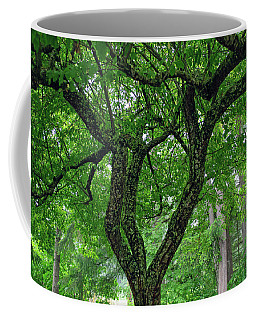 Coffee Mug featuring the photograph Under The Shade Tree by Tikvah's Hope