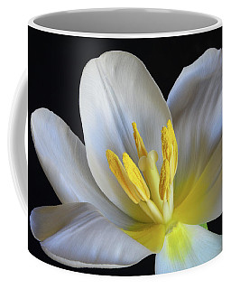Coffee Mug featuring the photograph Unfolding Tulip. by Terence Davis