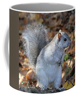 Coffee Mug featuring the photograph Unusual White And Gray Squirrel by Doris Potter