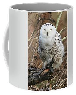 Up Close Snowy  Coffee Mug