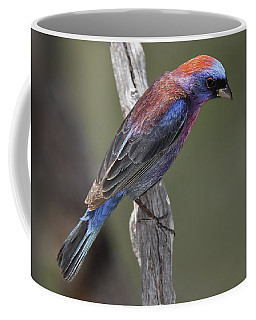 Varied Bunting Coffee Mug