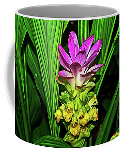 Variegated Hidden Ginger 001 Coffee Mug