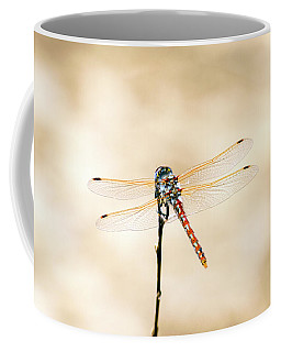 Varigated Meadowhawk Dragonfly Sympetrum Corruptum Coffee Mug