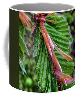 Beech  Coffee Mug