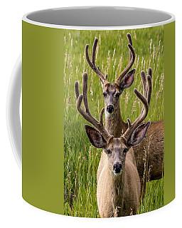 Velvet Bucks Coffee Mug
