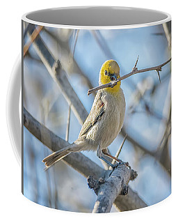 Verdin Collecting Nest Material Coffee Mug by Tam Ryan
