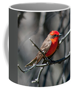 Coffee Mug featuring the photograph Vermilion Flycatcher by Dan McManus