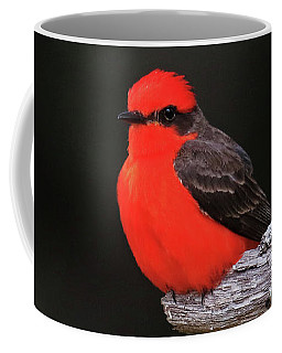 Vermilion Flycatcher Mug Coffee Mug