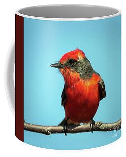 Vermilion Flycatcher - Pyrocephalus Rubinus Coffee Mug