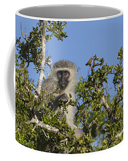 Vervet Monkey Perched In A Treetop Coffee Mug
