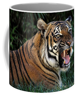 Coffee Mug featuring the photograph Very Cranky Today by Elaine Malott